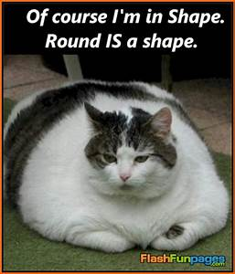 Fattest Cat In The World Pictures to Pin on Pinterest ...