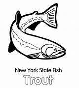 Trout Coloring Pages State York Fish Apache Template Brook Paper Tocolor Button Through sketch template