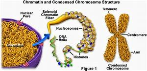 29 Dna Structure