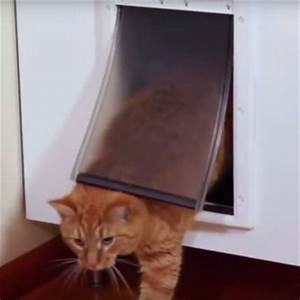 How to keep dogs cats away from each others food for Cat bathroom door
