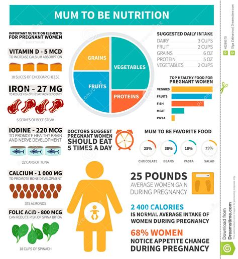Pregnancy Nutrition Infographic Stock Vector Image 40289570
