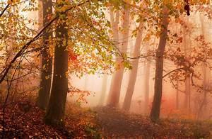 Photography, Nature, Landscape, Morning, Mist, Sunlight
