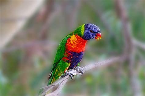 ornithological quiz      birds