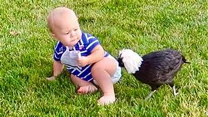 CHICKENS VS BABY! - YouTube
