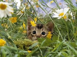 Kitten Spring Wallpaper - WallpaperSafari