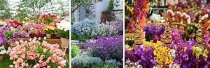 Chelsea Flower Show 2018 : 2018 chelsea flower show ~ Frokenaadalensverden.com Haus und Dekorationen