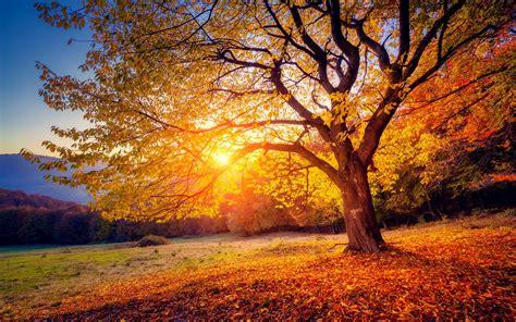 wallpaper tree sunset autumn 3840x2160 uhd 4k