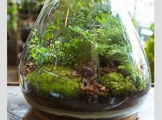 Beautiful Terrarium in 5 Easy Steps Neat And Cozy Home Ideas