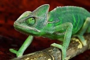 10 Amazing Animals That Use Camouflage