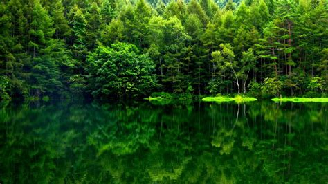 green forest wallpaper green forest 1920x1080 rebrn Beautiful