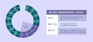 Whats A Normal Period After Birth