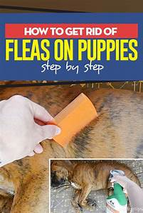 How To Get Rid Of Fleas On Puppies