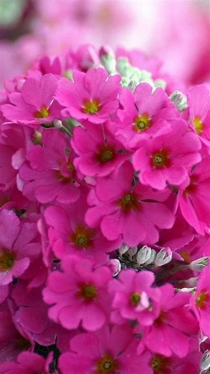 Iphone Flower Wallpapers Flores Sfondo Fondos Wallpapersafari