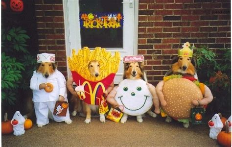 Winnie The Pooh Pumpkin by Dog Costumes 10 Halloween Costume Ideas For Your Dog