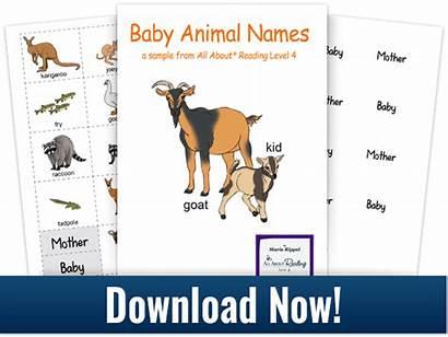 Animals Names Animal Matching Match Activity Mommas