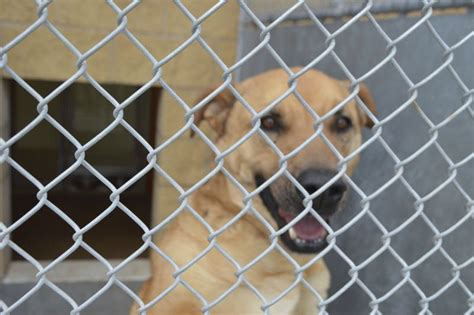 dogs on sale norman shelter reduces price to increase