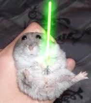 cute hamsters with guns - Google Search | linus's faverate ...