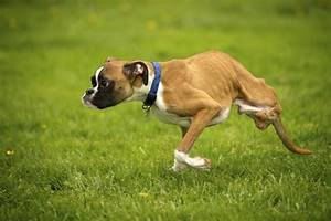 2-legged Washington dog charms millions with video | The ...