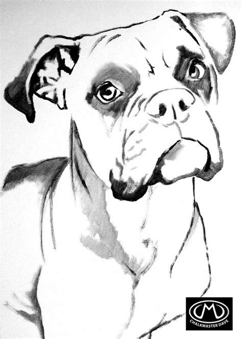Boxer colouring page   Boxer dogs art, Boxer painting, Dog