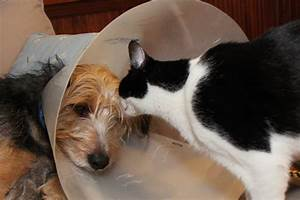 Dog And Cat Love Story