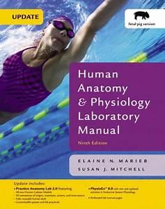 Human Anatomy  U0026 Physiology Laboratory Manual  Fetal Pig