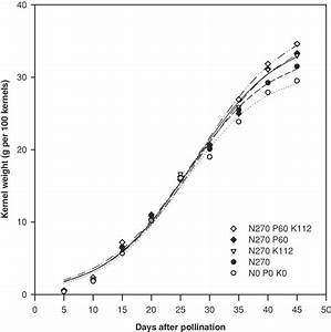 Response Of Corn Grain Filling To Nitrogen  N   Phosphorus