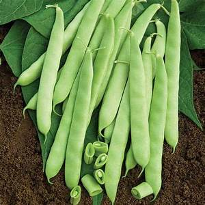 Bean  Furano  Ramano  - Vegetable Seed