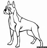 Boxer Coloring Dog Dogs Pages Trace Outline Sheets Adult Drawing Thecolor Printable Colors Clipart Template Books Templates sketch template