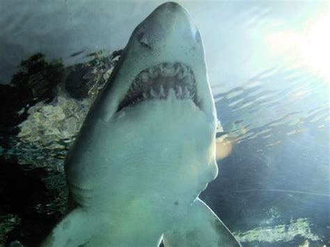 Images About Sea World Pinterest San Diego