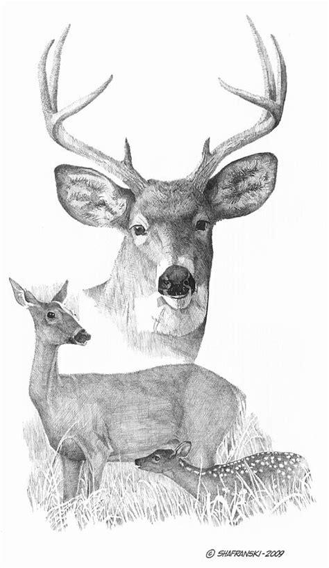 Deer Family Drawing by Paul Shafranski