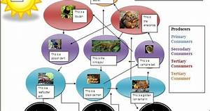 Tropical Rainforest Food Web