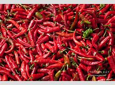 Photo Red chili peppers for sale at the weekend market