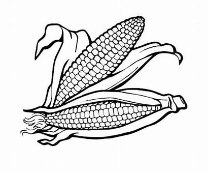Coloring Thanksgiving Corn Pages Healthy Clipart Drawing