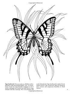 Dragonfly Free Printable Wood-Burning Patterns   Wood