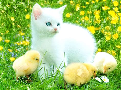 Cats And Kittens Wallpaper  Wwwimgkidcom  The Image