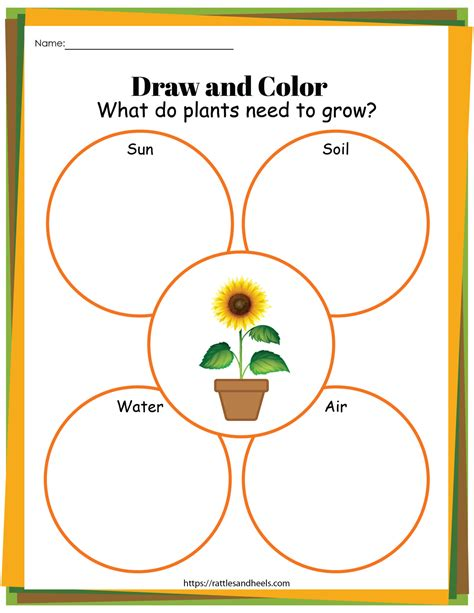plant life cycle worksheets  printables  kids