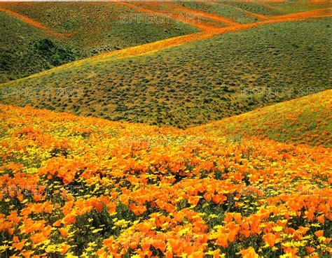 photographer foto fiori paesaggi fioriti