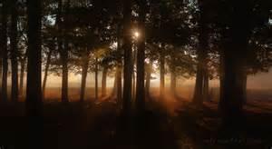 autumn trees photo in richmond park