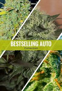 Best Autoflowering Cannabis Seeds Of 2019  Buying Guide