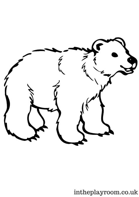 Arctic Animals Colouring Pages In The Playroom