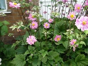 Japanese Garden Plants Photo
