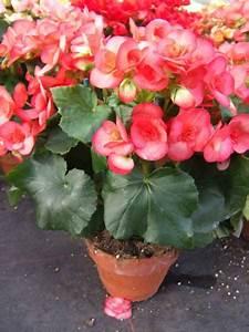 Plante Fleurie Intérieur : plante fleurie interieur ~ Premium-room.com Idées de Décoration