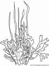 Seaweed Coloring Pages Drawing Ocean Drawings Plants Line Coral Sea Printable Underwater Google Colouring Plant Cartoon Draw Stencils Books Literacy sketch template