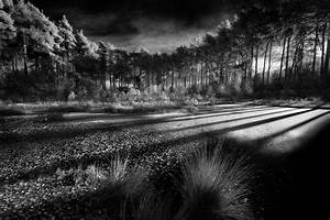 Nature, Landscape, Forest, Morning, Sunlight, Swamp, Shrubs, Trees, Clouds, Shadow, Monochrome