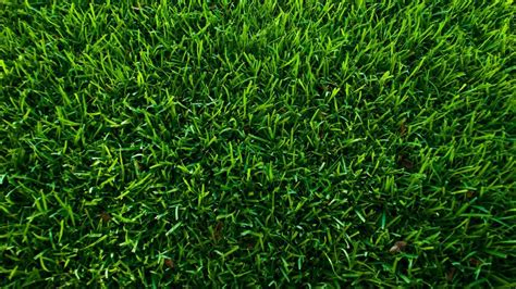 What Is The Best Way To Kill Grass? Referencecom