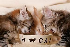 Kochen Für Katzen : katzenfutter selber machen mit rezeptvorschlag ~ Lizthompson.info Haus und Dekorationen