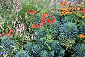 Plantes Exotiques Rustiques : massif color tendance exotique place des jardins le blog ~ Melissatoandfro.com Idées de Décoration