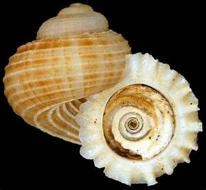 How Many Species Are In The Mollusca Phylum