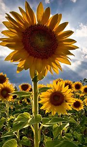 25 Flowers iPhone Wallpapers