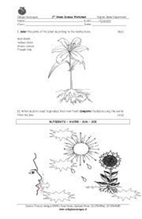 requirements for growth of plants natural science worksheet grade 4 life and living